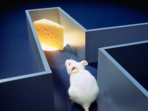 עכברים במבוך - תפיסת האדם של השמאל