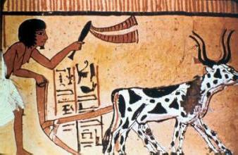 לא שיפרו את חייהם - חקלאים במצרים העתיקה