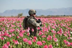 סיבוך מיותר - חייל מכוחות הקואליציה בשדה פרג אפגני