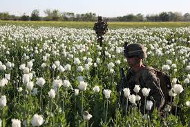 נתפס כרוע מזוקק - שדה פרג באפגניסטן