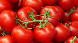Tomato-genome-sequenced