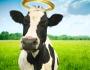 דוקטור, תציל אותי: על אקדמיה, פרות קדושותולונה-פארק